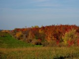 Colors of the Season by kidder, Photography->Landscape gallery