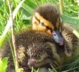 Cuter aww!!! by owldgirl, photography->birds gallery