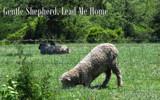 Gentle Shepherd by 0930_23, photography->animals gallery