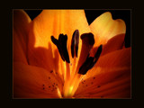 Inner Light by LynEve, Photography->Flowers gallery