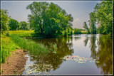 Local Pond by corngrowth, photography->landscape gallery