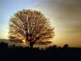 A tree in winter by ppigeon, Photography->Sunset/Rise gallery