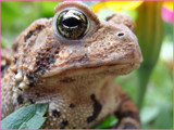 Here's Lookin' at Ya! by Riverside, Photography->Reptiles/amphibians gallery