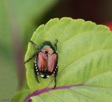 Garden Pest by tigger3, photography->macro gallery