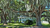 Spanish Moss by 100k_xle, photography->landscape gallery