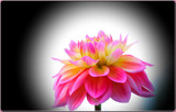 Dahlia Beautiful _ second posting by tigger3, Photography->Flowers gallery