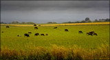 Country scene by LynEve, photography->landscape gallery