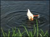 Gatorbait by madmaven, Photography->Birds gallery