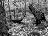 Woodland Morning by snapshooter87, contests->b/w challenge gallery
