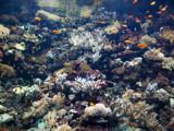 Aquarium by ederyunai, Photography->Underwater gallery