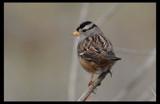 Good-bye by garrettparkinson, photography->birds gallery