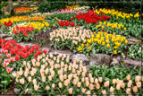Keukenhof 08 by corngrowth, photography->gardens gallery