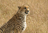 hey, kitty! by jeenie11, Photography->Animals gallery
