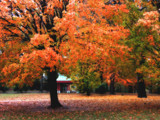 Orange after the Rain by jojomercury, Photography->Landscape gallery