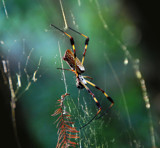 What a tangled web we weave... by lilu103, photography->insects/spiders gallery