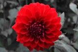 B.W.R.(BLACK,WHITE,RED) by roxanapaduraru, photography->manipulation gallery