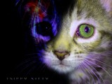 trippy kitty by _whitewidow_, abstract->Surrealism gallery