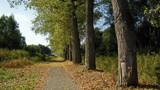 Idyllic Lane by Magicpic, photography->landscape gallery