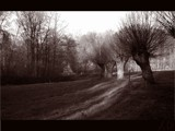 Arbres by Frelu, photography->landscape gallery