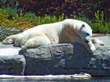 Sleepyhead by hirschikiss22, photography->animals gallery