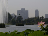 Lotus Field 2 by bikolnon, Photography->Landscape gallery