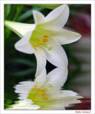Easter Lily by ladyred, Photography->Flowers gallery