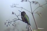 Soft by garrettparkinson, photography->birds gallery