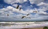 Gulls Gliding By by LynEve, photography->birds gallery
