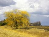 Minnesota RFD by jojomercury, Photography->Landscape gallery