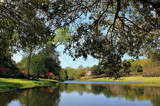 Mirror Lake North by allisontaylor, photography->gardens gallery