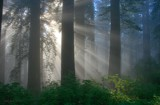 California Redwoods by nmsmith, photography->landscape gallery