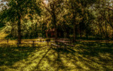 Summer Picnics by casechaser, photography->nature gallery