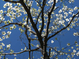Sun Drenched in Spring by allisontaylor, Photography->Flowers gallery