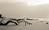 Toppled Landscape by aboogie, photography->shorelines gallery