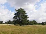 Barnham cross common   #1 by salhag71, Photography->Landscape gallery
