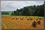 Ohio Amish Country by Jimbobedsel, Photography->Landscape gallery