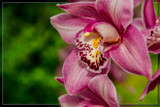 F² Orchids 11 by corngrowth, photography->flowers gallery