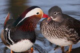 Friends by Paul_Gerritsen, Photography->Birds gallery