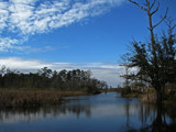 Bayou in Winter by allisontaylor, Photography->Shorelines gallery