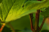 Further From Home by Eubeen, photography->insects/spiders gallery