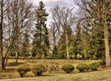 Hillside Honkers  2 by Jimbobedsel, Photography->Landscape gallery