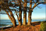 Afternoon Sun by LynEve, photography->landscape gallery