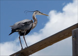 Island Birds II by allisontaylor, Photography->Birds gallery
