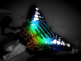 rainbow butterfly by co2metal, Photography->Manipulation gallery