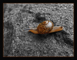 A Coloured Strole by dmk, Photography->Nature gallery