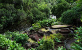 Iao Valley Garden by moongirl, Photography->Gardens gallery