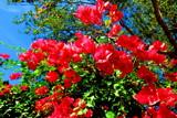 Friday BG Foof by GomekFlorida, photography->flowers gallery