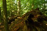 Still around by MeltingShip, Photography->Landscape gallery