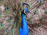 Animal Crackers XX by Hottrockin, Photography->Birds gallery