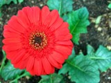 Spreading joy-20 by sahadk, Photography->Flowers gallery